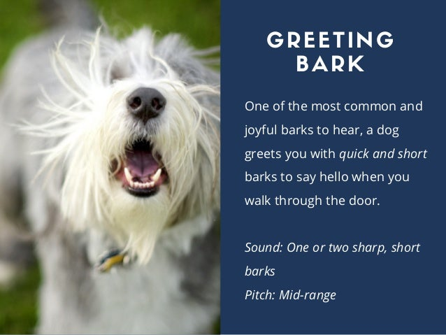 One of the most common and joyful barks to hear, a dog greets you with quick and short barks to say hello when you walk th...