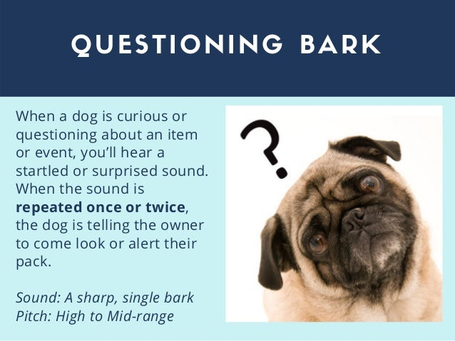 QUESTIONING BARK When a dog is curious or questioning about an item or event, you'll hear a startled or surprised sound. W...