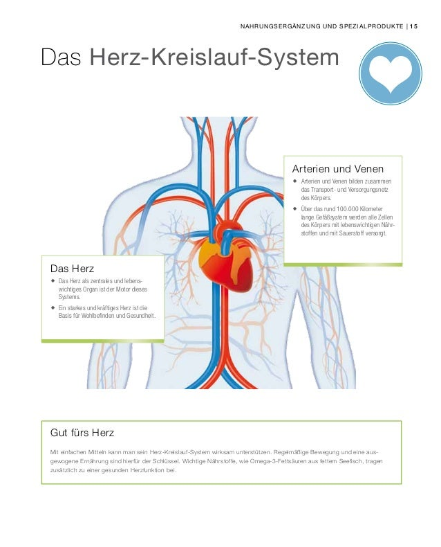 Atemberaubend Das Herz Kreislauf System Diagramm Galerie ...