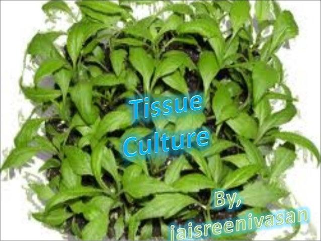tissue culture hybridization