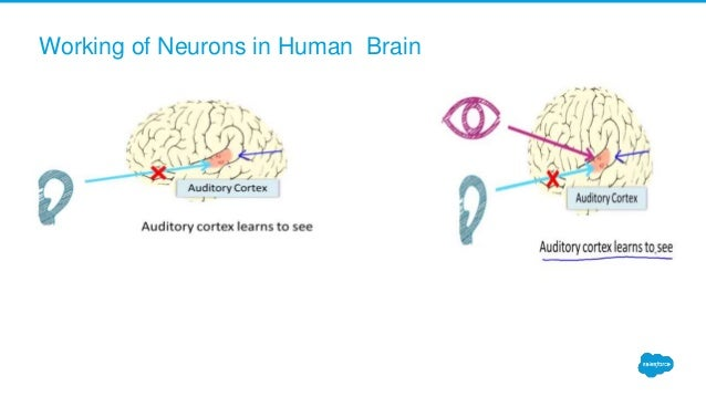 Working of Neurons in Human Brain