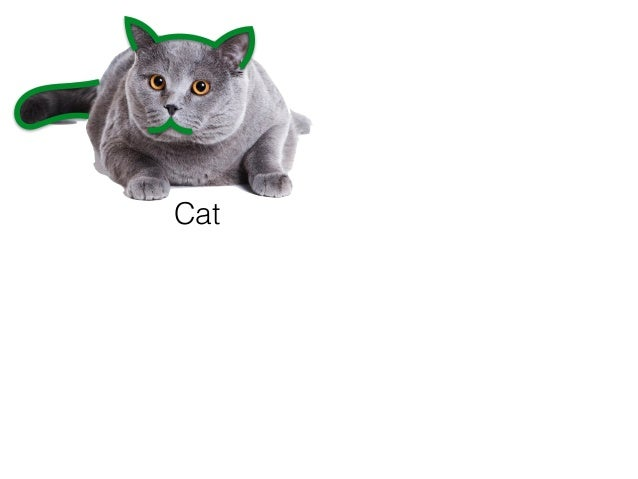 Cat Representation