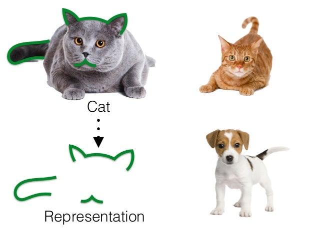 Cat Representation Cat