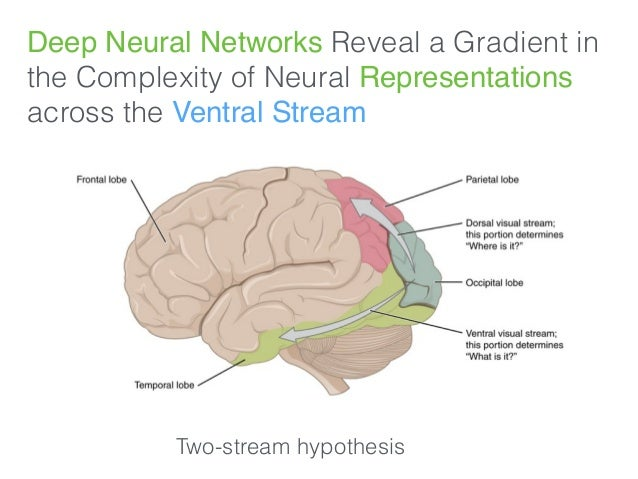 Deep Neural Networks Reveal a Gradient in the Complexity of Neural Representations across the Ventral Stream Two-stream hy...