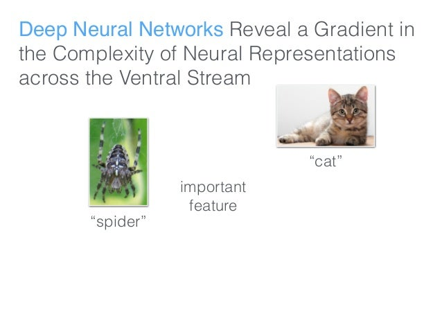 """Deep Neural Networks Reveal a Gradient in the Complexity of Neural Representations across the Ventral Stream """"spider"""" """"cat..."""
