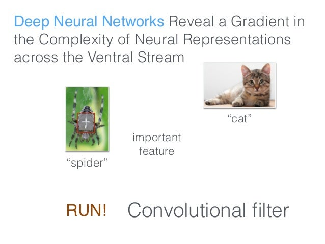 """Deep Neural Networks Reveal a Gradient in the Complexity of Neural Representations across the Ventral Stream """"spider"""" impo..."""