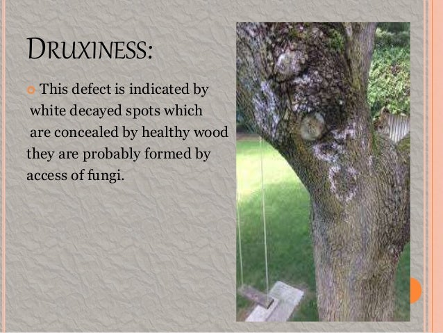 Defects In Timber Natural Force