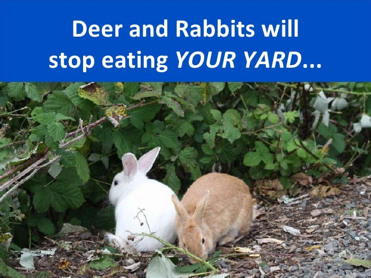 How to keep rabbits out of garden fasci garden - How to keep rabbits out of a garden ...