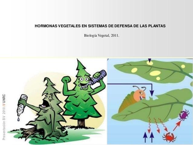 Defensa en plantas for Hormonas en las plantas