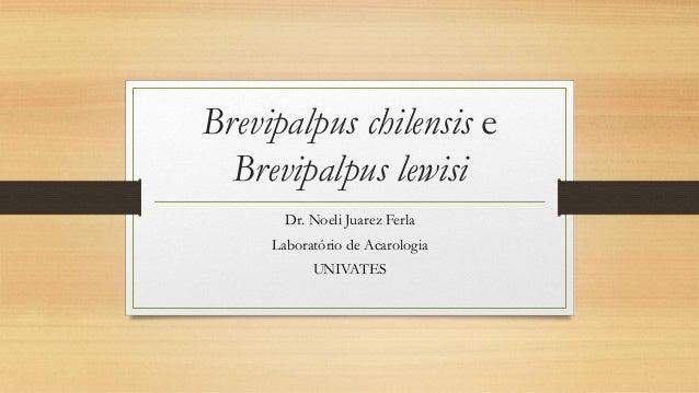 Brevipalpus chilensis e Brevipalpus lewisi  Dr. Noeli Juarez Ferla  Laboratório de Acarologia  UNIVATES