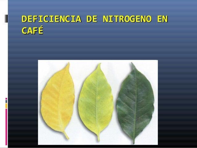 DEFICIENCIA DE NITROGENO ENDEFICIENCIA DE NITROGENO EN CAFÉCAFÉ