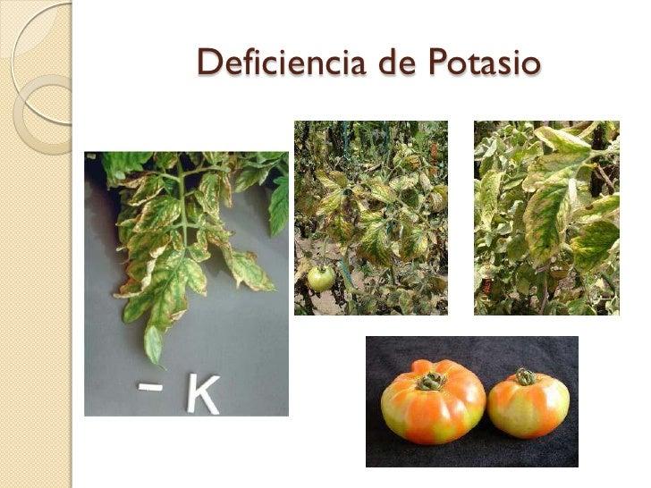 Deficiencias nutricionales tomate de mesa for Potasio para plantas