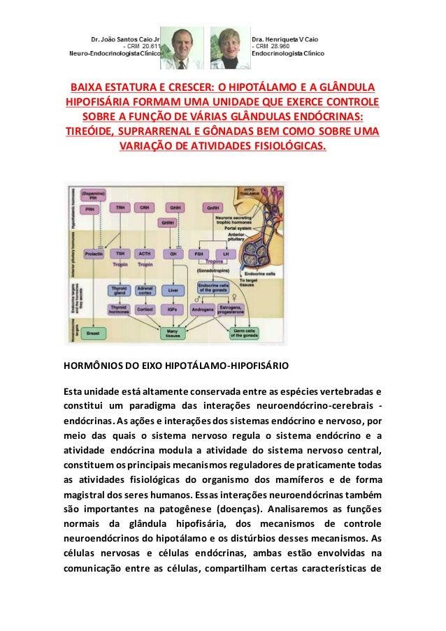 BAIXA ESTATURA E CRESCER: O HIPOTÁLAMO E A GLÂNDULA HIPOFISÁRIA FORMAM UMA UNIDADE QUE EXERCE CONTROLE SOBRE A FUNÇÃO DE V...