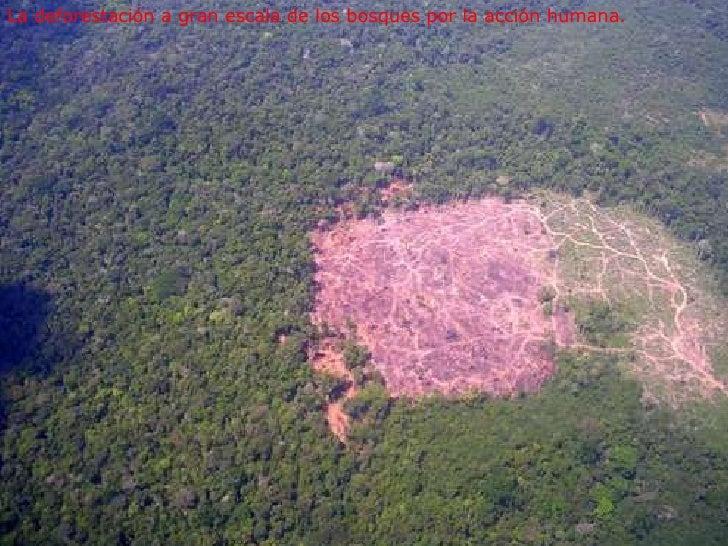 La deforestación a gran escala de los bosques por la acción humana.