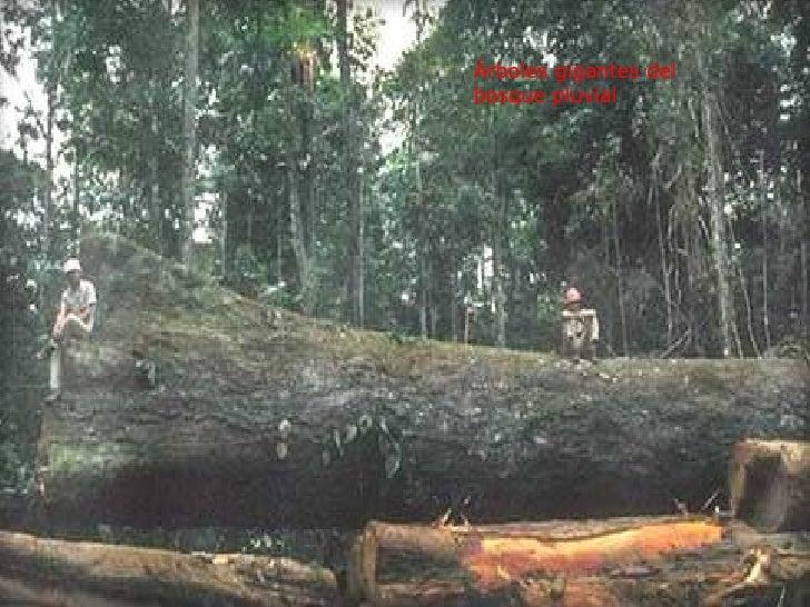 DEFORESTACION O.F.G Slide 2