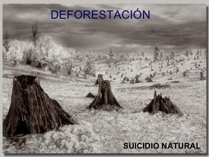 DEFORESTACIÓN SUICIDIO NATURAL