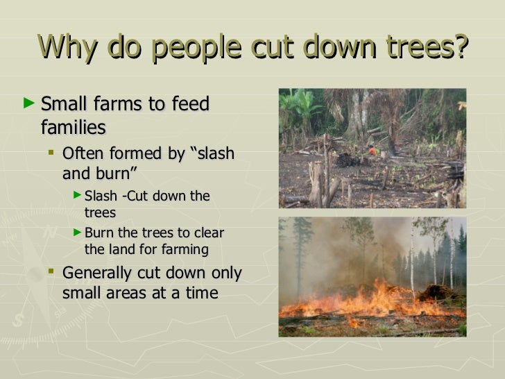 why we should not cut trees Check out our top free essays on why should we not cut trees to help you write your own essay.