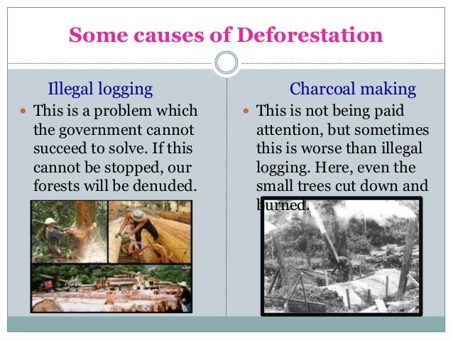 causes of deforestation urban and construction purposes Urbanization & deforestation this would also increase the need for more construction materials and resources to house the urban populations i was unsure about barbara's argument that bigger urban areas cause environmental problems but small cities also cause massive.