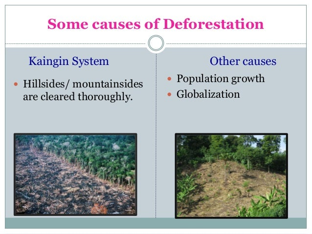 causes of kaingin farming Animal hunting, cogon collection and slash-and-burn (kaingin) farming were the  common causes of fires that happened mostly in the dry months, said alfred.