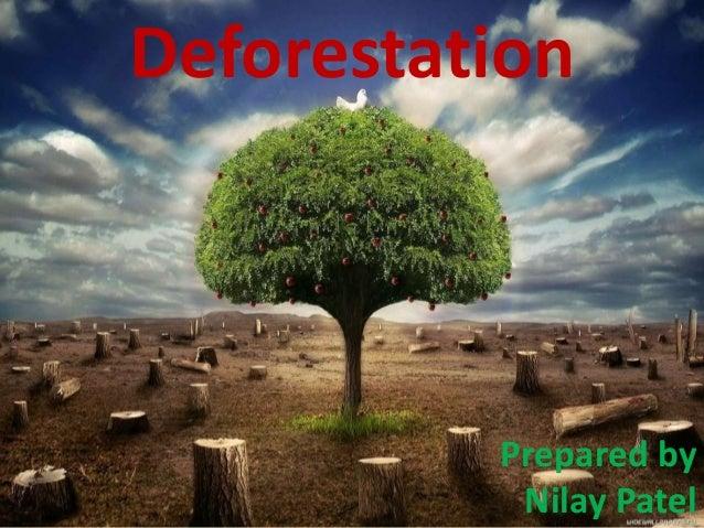 Prepared by Nilay Patel Deforestation