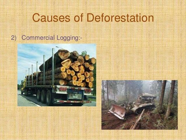 Causes of Deforestation 2) Commercial Logging:-