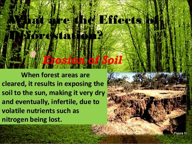 deforestation a hazard The word deforestation is used to describe the process of cutting down and burning the trees in forests and woodland and converting.