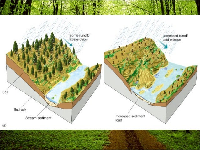 define the causes and hazards of deforestation All disasters are hence the result of human failure to introduce appropriate disaster management measures hazards are that causes a tsunami deforestation.