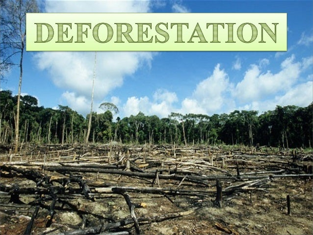 causes effects and solutions of deforestation Deforestation is one of the major causes to the environmental degradation which is affected by the agents like  major causes and effects of deforestation.