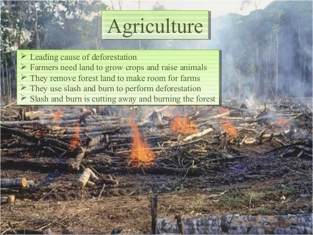 bad effects of deforestation Deforestation of the amazon rainforest could have a world-wide impact on  the  issue is that the amazon is so big that it affects weather at the.