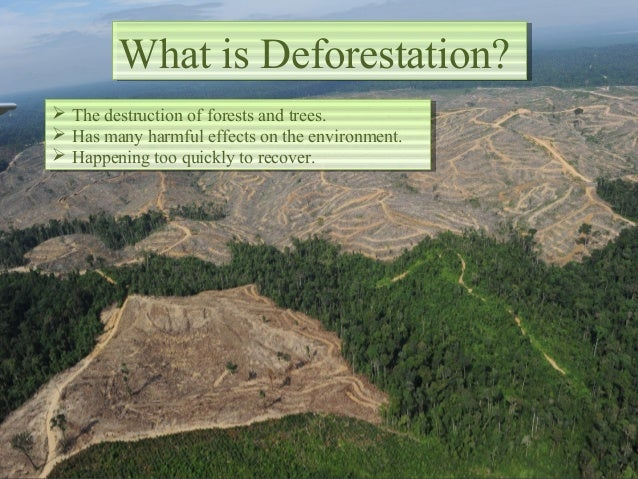 the harmful effects of deforestation in the environment Deforestation affects the environment in a multitude of ways the most obvious  effect is a loss of biodiversity when an ecosystem is radically altered through.
