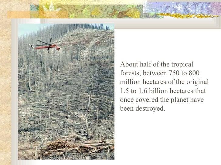 Deforestation Slide 3