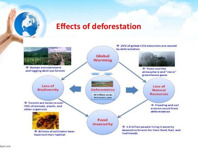 Deforestation mitigation