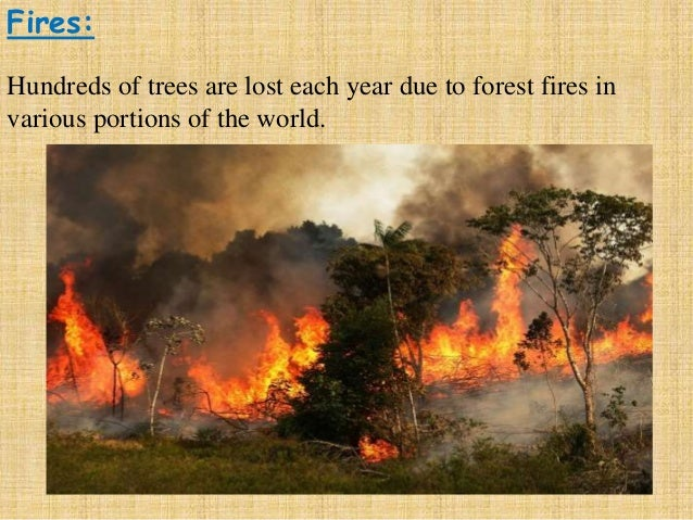 impact of deforestation in bangladesh Security forces launch raids linked to deforestation in the carpathian mountains, home to some of europe's last virgin forest.