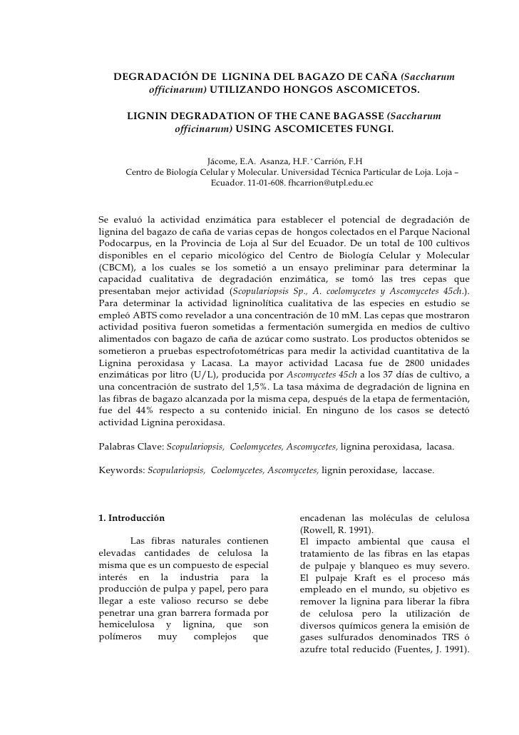 DEGRADACIÓN DE LIGNINA DEL BAGAZO DE CAÑA (Saccharum         officinarum) UTILIZANDO HONGOS ASCOMICETOS.        LIGNIN DEG...
