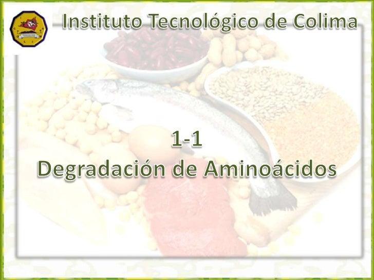 Instituto Tecnológico de Colima<br />1-1<br />Degradación de Aminoácidos<br />