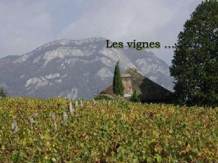 Les vignes …<br />
