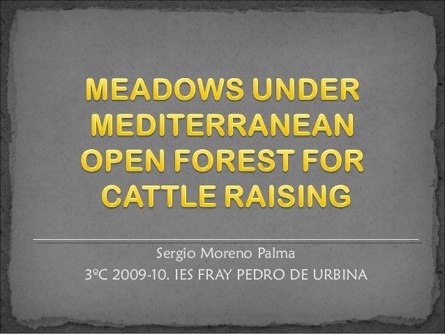Sergio Moreno Palma3ºC 2009-10. IES FRAY PEDRO DE URBINA