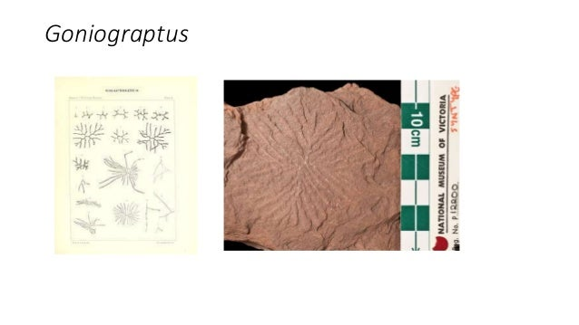 40 . . . . . . 2 • A Clonograptus fossil was found in the surface bedrock at 43° N 73°30 W. In which New York State • land...