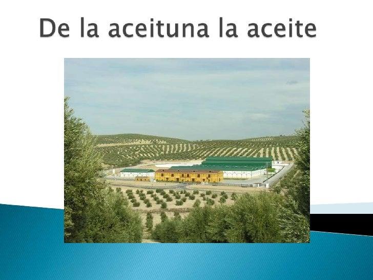De la aceituna la aceite<br />