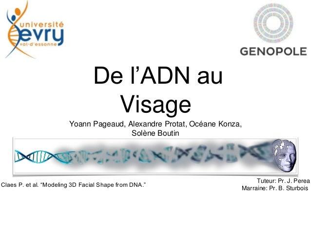 De l'ADN au Visage Yoann Pageaud, Alexandre Protat, Océane Konza, Solène Boutin Tuteur: Pr. J. Perea Marraine: Pr. B. Stur...