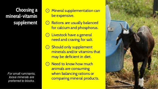 should you feed small ruminants full concentrate diets?
