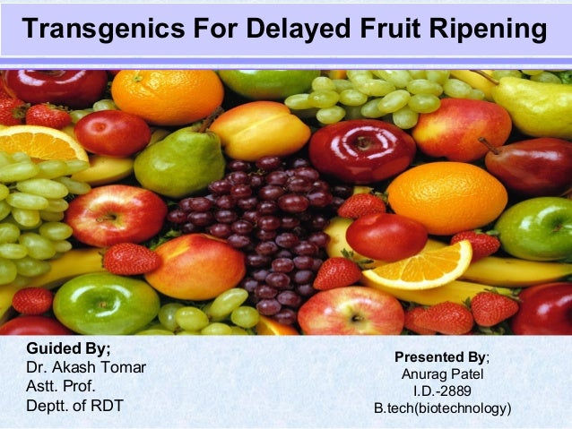 Transgenics For Delayed Fruit Ripening Presented By; Anurag Patel I.D.-2889 B.tech(biotechnology) Guided By; Dr. Akash Tom...