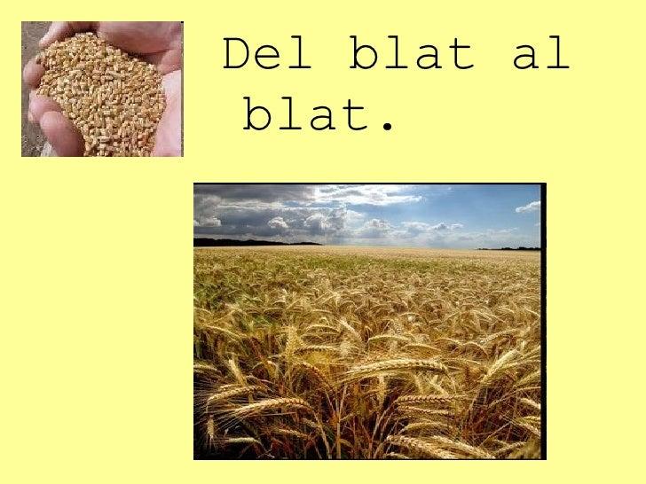 Del blat al blat.