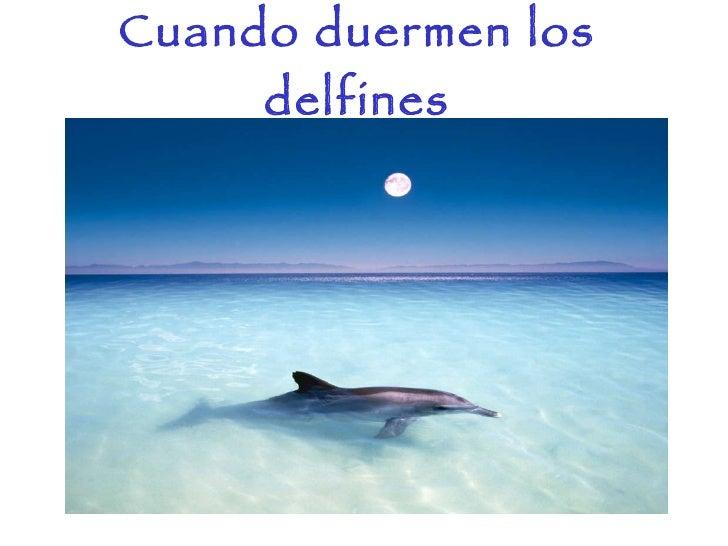 Delfines Slide 2