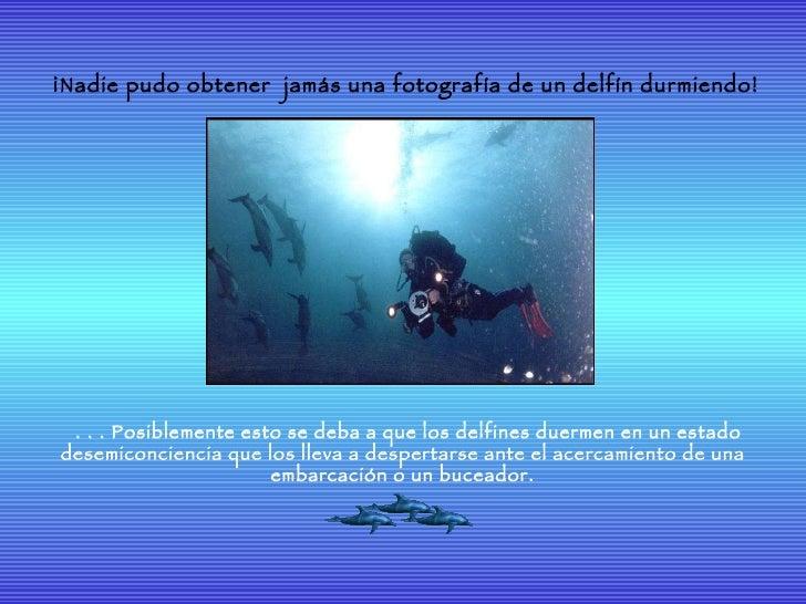 Delfines Slide 3