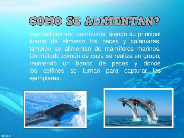 el delfín, uno de los animales mas inteligentes