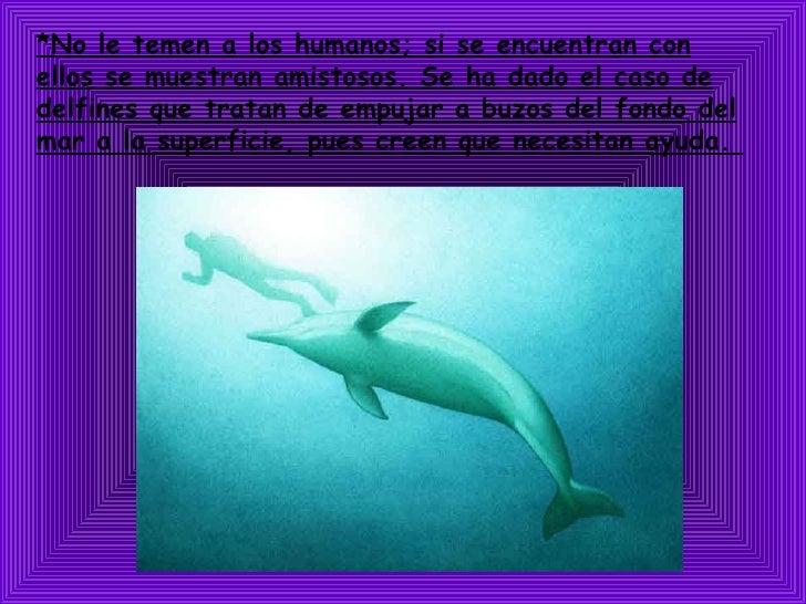 *No le temen a los humanos; si se encuentran con ellos se muestran amistosos. Se ha dado el caso de delfines que tratan de...