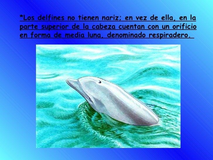 *Los delfines no tienen nariz; en vez de ella, en la parte superior de la cabeza cuentan con un orificio en forma de media...
