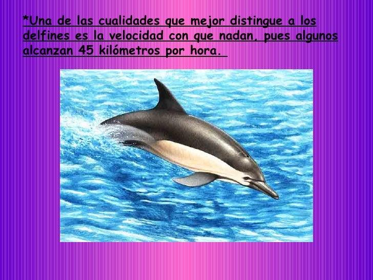 *Una de las cualidades que mejor distingue a los delfines es la velocidad con que nadan, pues algunos alcanzan 45 kilómetr...