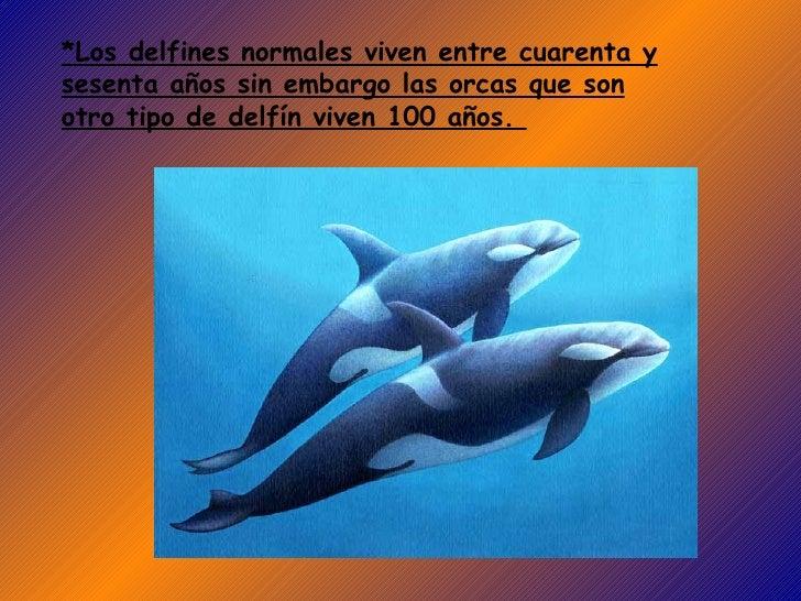 *Los delfines normales viven entre cuarenta y sesenta años sin embargo las orcas que son otro tipo de delfín viven 100 año...